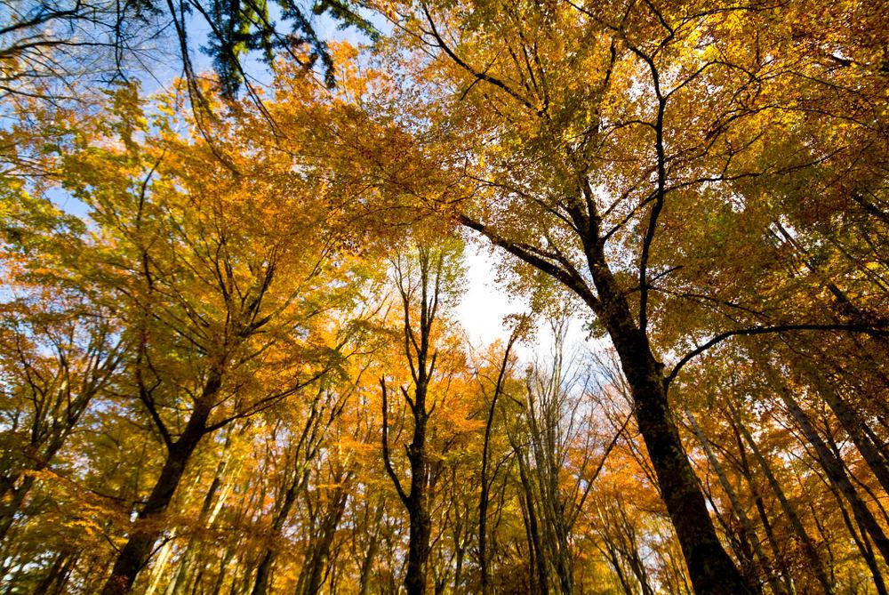 Foliage Gargano