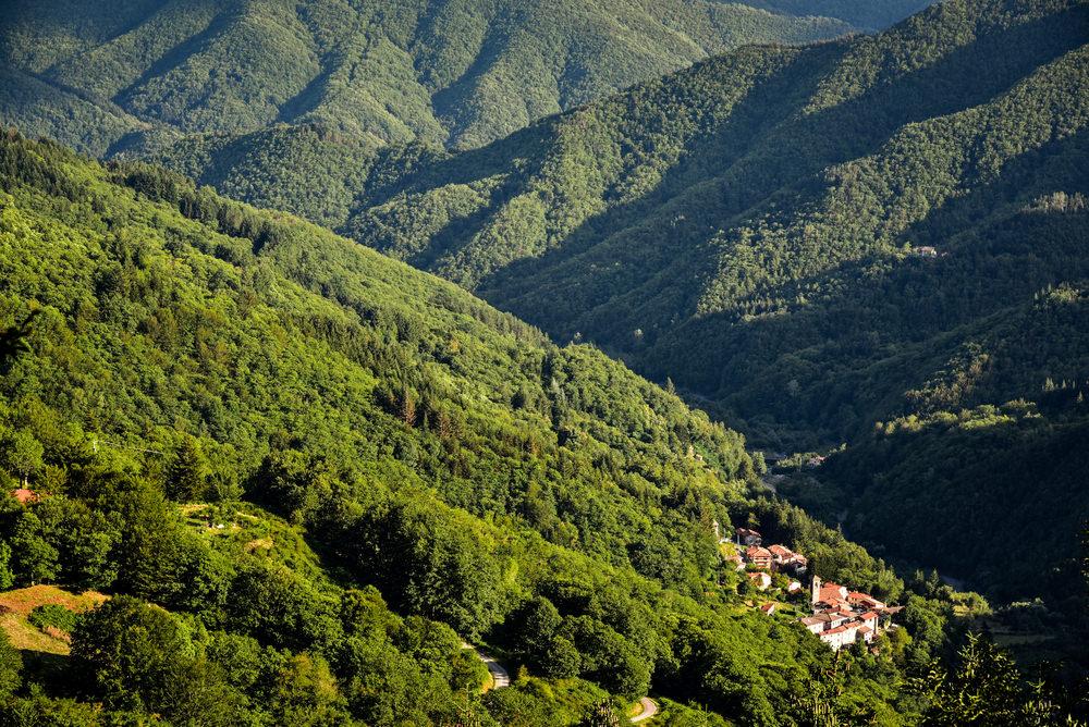 Foresta del Teso, Orsigna